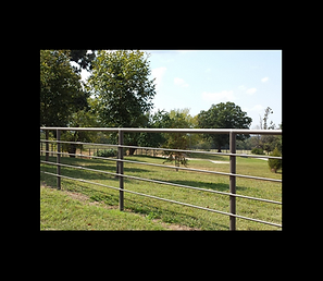 metal pipe fence
