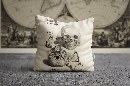 THE ACADEMIA | Skull Exp