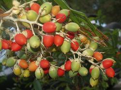 Foliage Berries