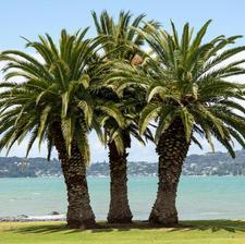 棕櫚樹小組