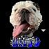 otis the bulldog