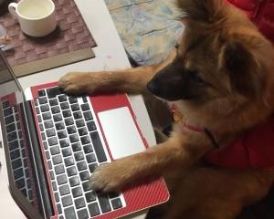 パソコン壊れる時は飛躍の前触れ??