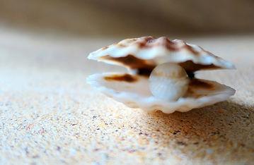 ostrica perla.jpg