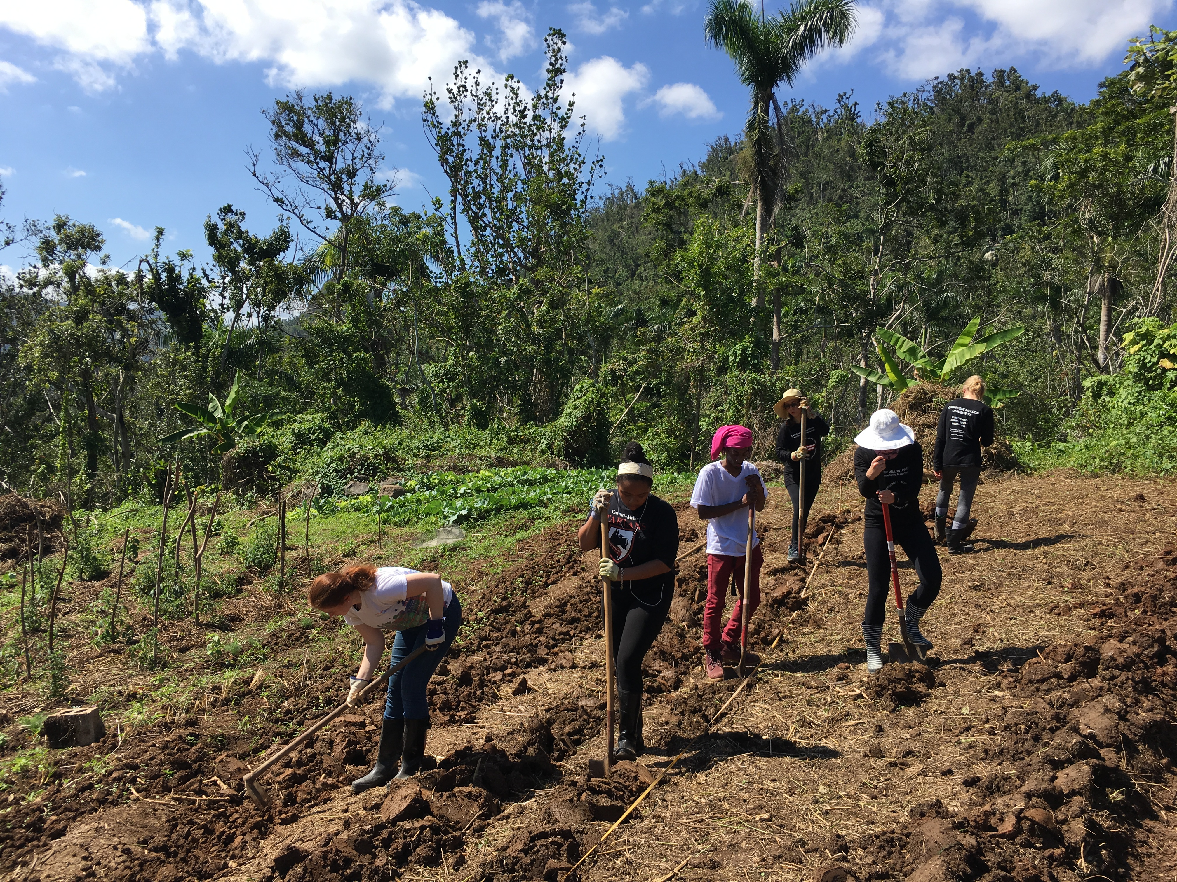 Creating Planting Beds on Contour in Arecibo to Run Water Away from Plants and Prevent Erosion