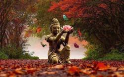 bouddha automne fleur