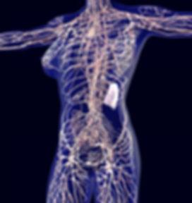 人体SCANイメージ
