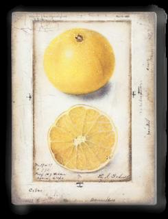 T371 Citron