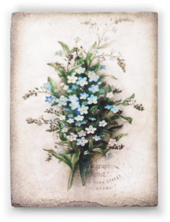 T444 Forget Me Not