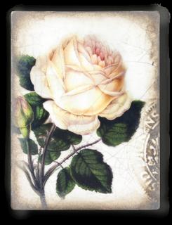 T374  Sweet Rose