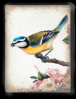 T367 Song Bird