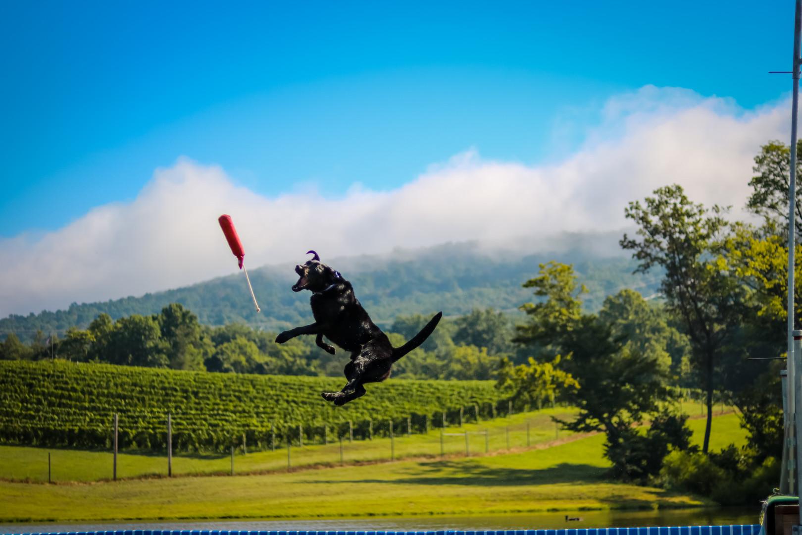Jack Flies Among the Vines 2016.jpg