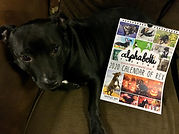 A black Staffordshire with a calendar beside him