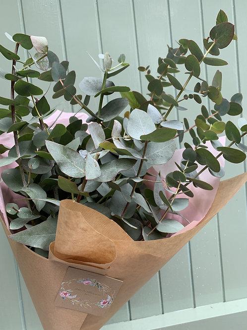 Eucalyptus Green Goddess