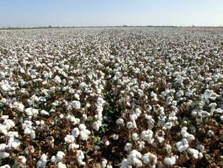 Success Stories in Peru's Garment Industry