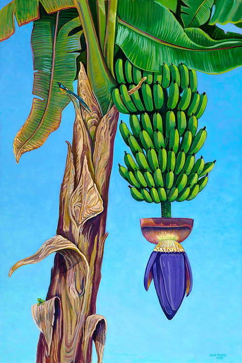 Banana Palm Flower