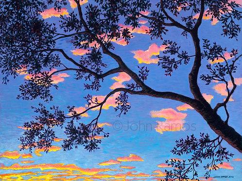 Sunrise in the Oaks