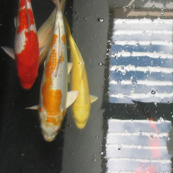 Fische+.jpg