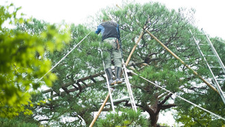 Homem atingido por galho de árvore no Parque Ibirapuera será indenizado pela Prefeitura.