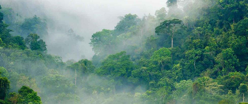 Klimaneutral_waldschutz.png