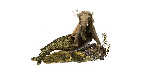 mermaid elephant.jpg
