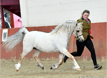 South Eastern Association Spring Show
