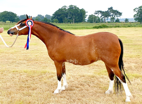 SWAWPCS Silver Medal Summer Show