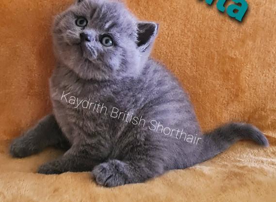 Kaydrith Bonita