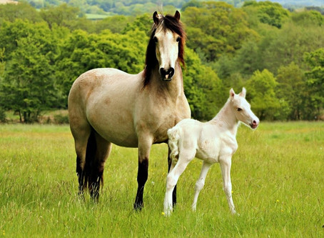 Foaling is Finished for 2020