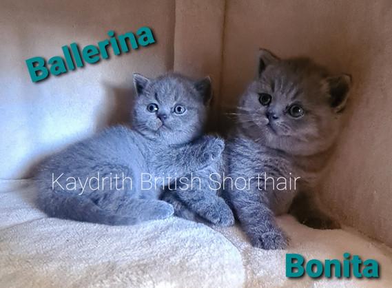 Kaydrith Ballerina and Bonita