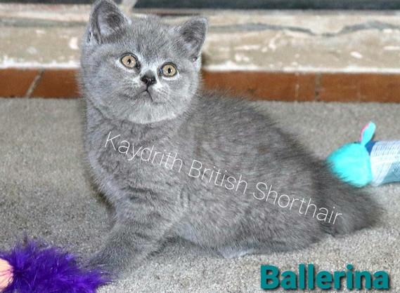Kaydrith Ballerina
