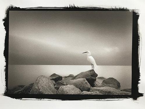Snowy Egret in Platinum Pd print
