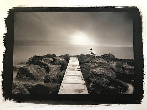 Pelican in Platinum Pd print