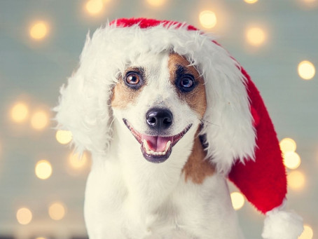 What Not to Feed your Dog this Festive Season