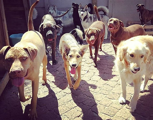 #dogsofcapetown #dogsofinstagram #golden
