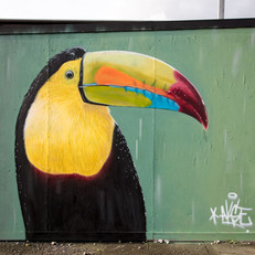 Toucan (2019)