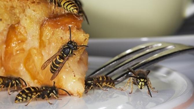 hvepsebekæmpelse.png