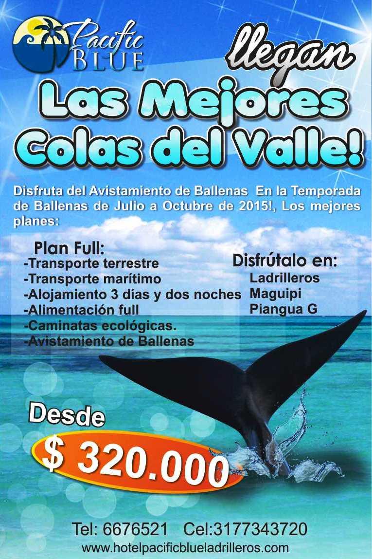 avistamiento de ballenas.png