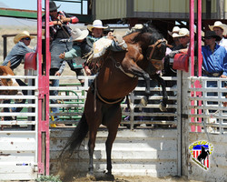 ssir_saddle_bronc.jpg