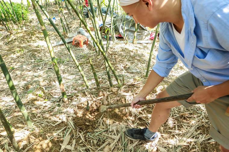 夏-挖竹筍體驗