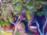 close up trees.jpg