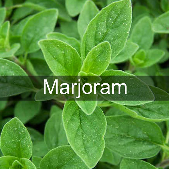 Marjoram Essential Oil 10ml Roller