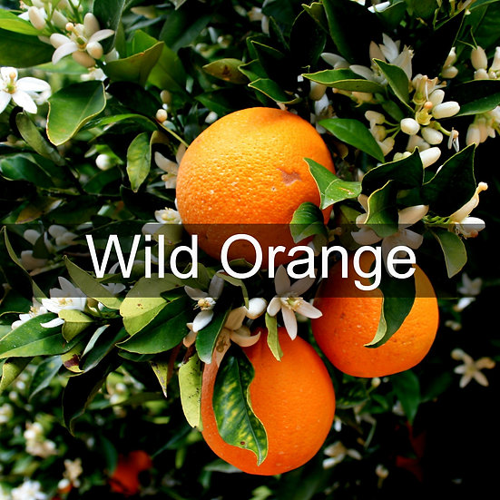 Wild Orange Essential Oil 10ml Roller