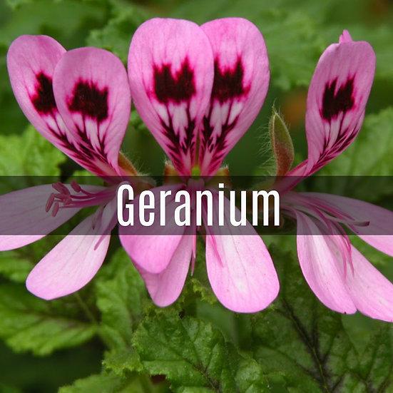 Geranium Essential Oil 10ml Roller