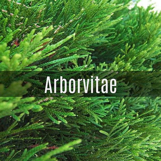Arborvitae Essential Oil 10ml Roller