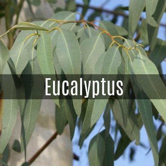 Eucalyptus Essential Oil 10ml Roller