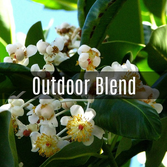 Outdoor Blend Essential Oil 10ml Roller