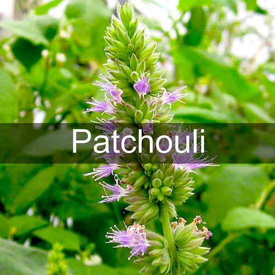 Patchouli Essential Oil 10ml Roller
