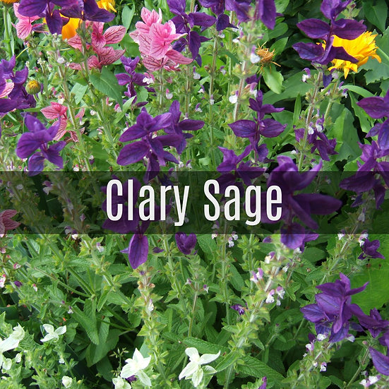 Clary Sage Essential Oil 10ml Roller