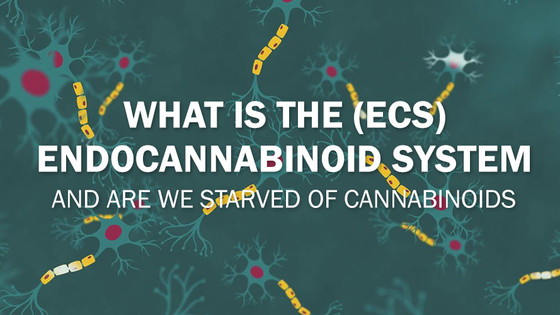What Is The Endocannabinoid System and Are We Starved of Cannabinoids?