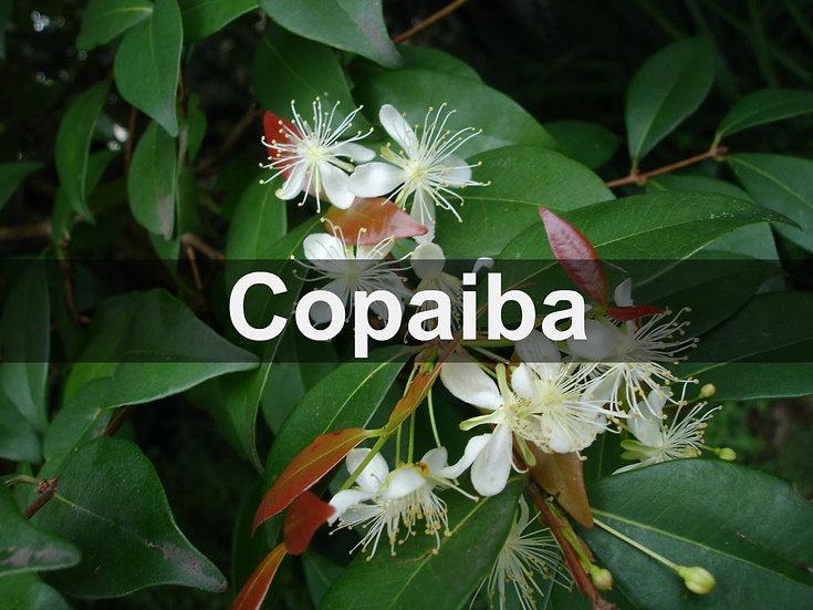 Copaiba Essential Oil 10ml Roller